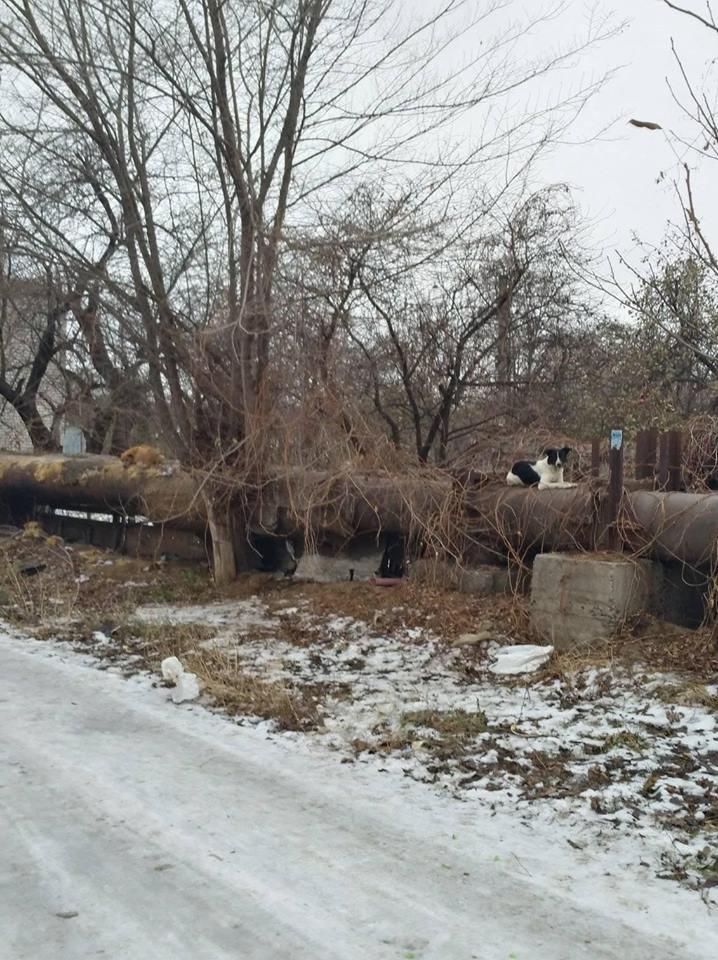 Бездомные собаки довольны - в Кривом Роге им зимой тепло