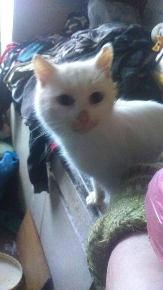 Любопытный кот-подросток. С ним не скучно. Легко поддается воспитанию. Очень нуждается в заботе и внимании.