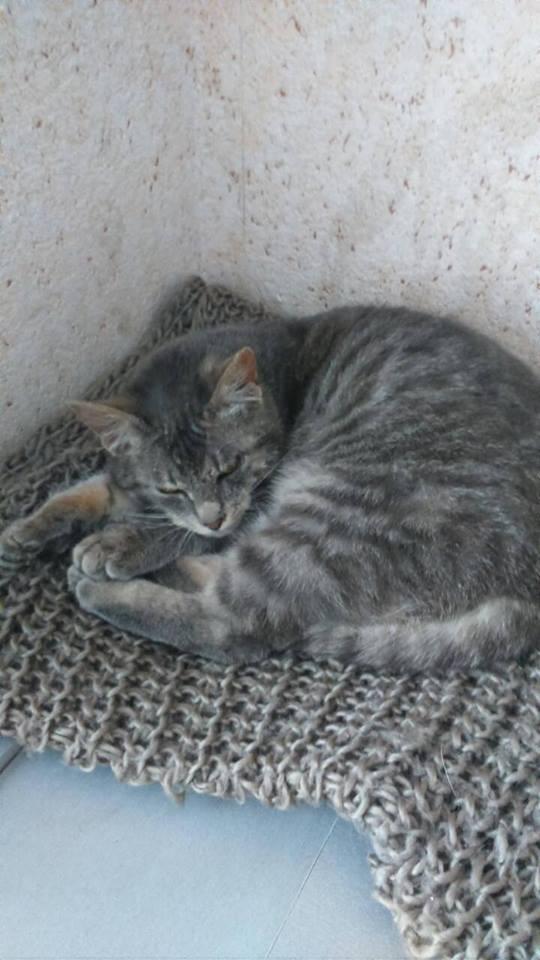 Самодостаточный и абсолютно беспроблемный котейка, который познал дзен. Преимущественно спит. В еде неприхотлив. Согласен на переезд.