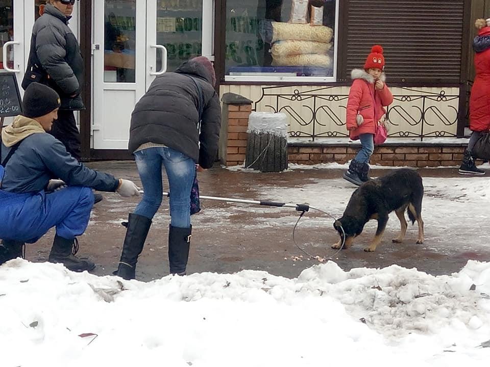Отлов собаки