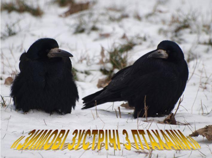 Зимние встречи с птицами