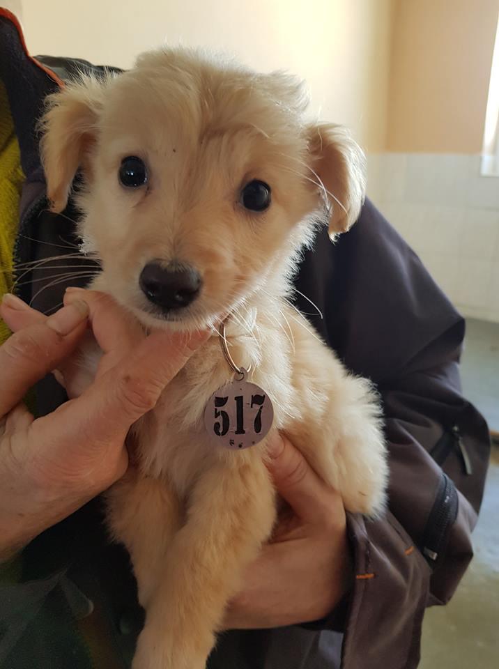 """30 октября этот милый щенок родился в криворожском """"Центре поводження з тваринами"""""""