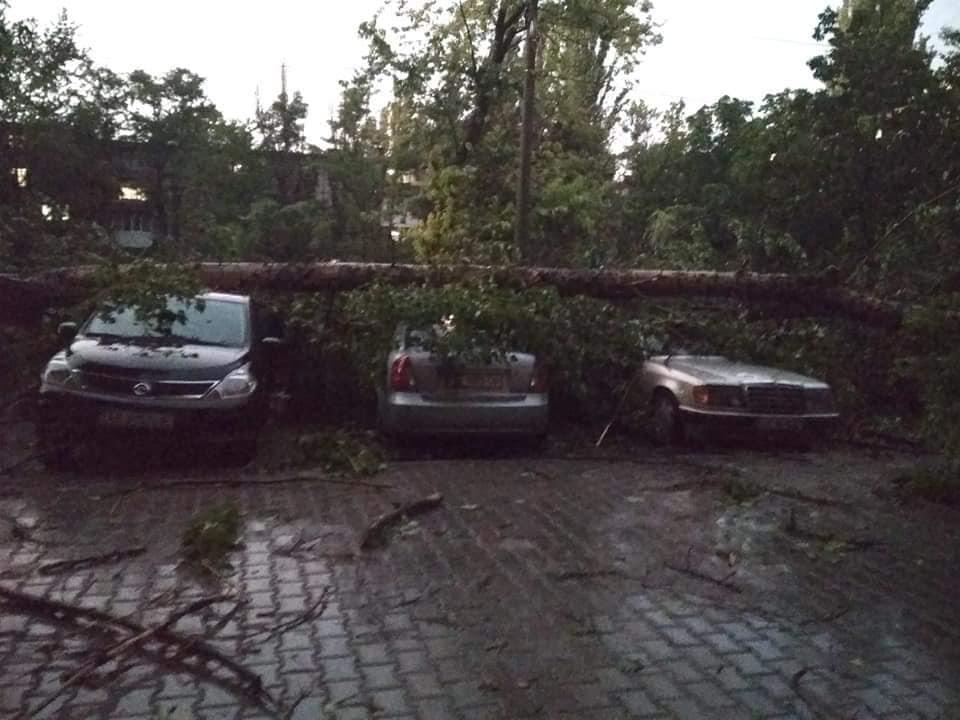 """А эти машины просто """"поймали"""" ствол дерева"""