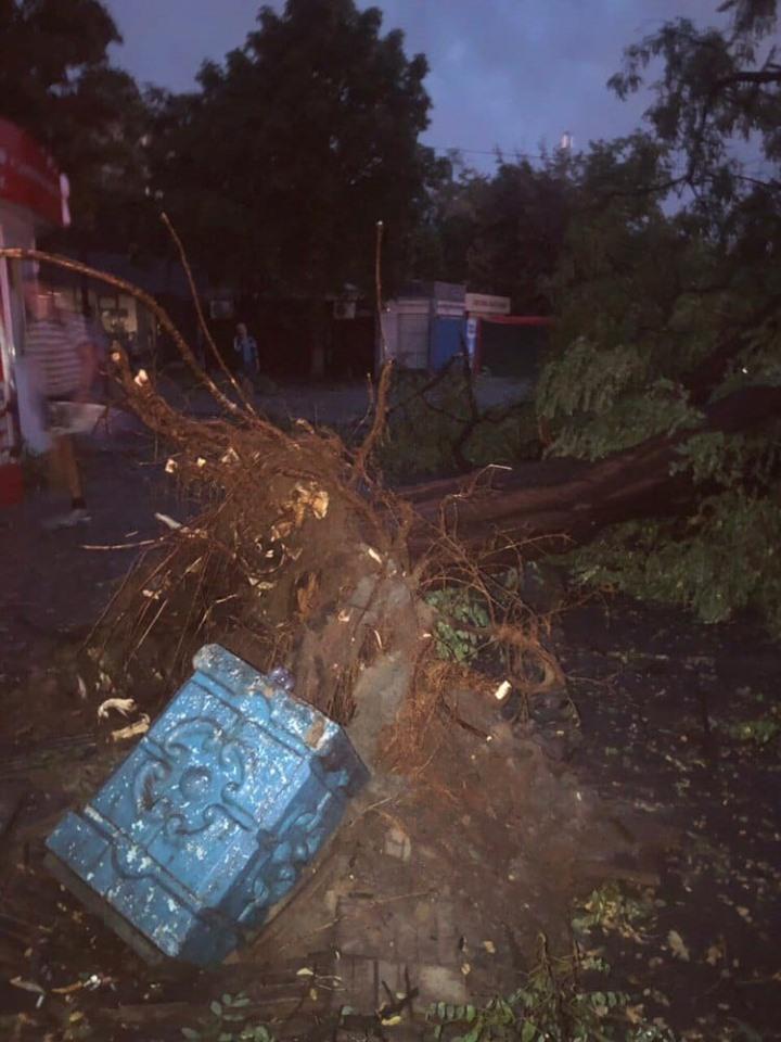 Буря выворачивала деревья с корнем