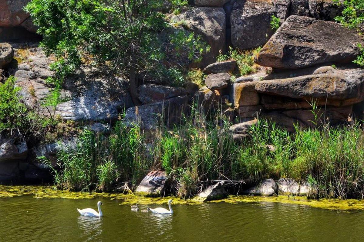 Лебеди тут тоже чувствуют себя отлично.
